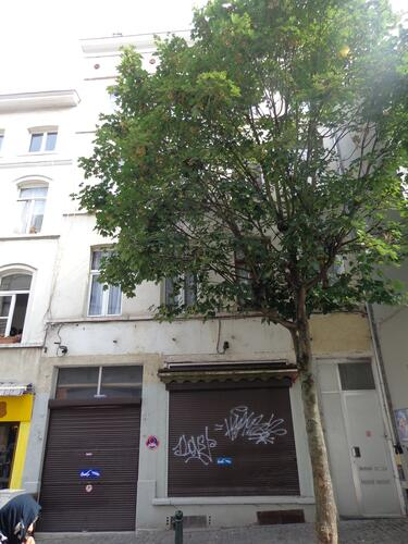 Rue du Chevreuil 10-12, 2015