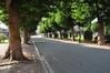 Avenue des Sports, vue de la voie sud en direction de l'avenue Houba de Strooper© ARCHistory / APEB, 2011