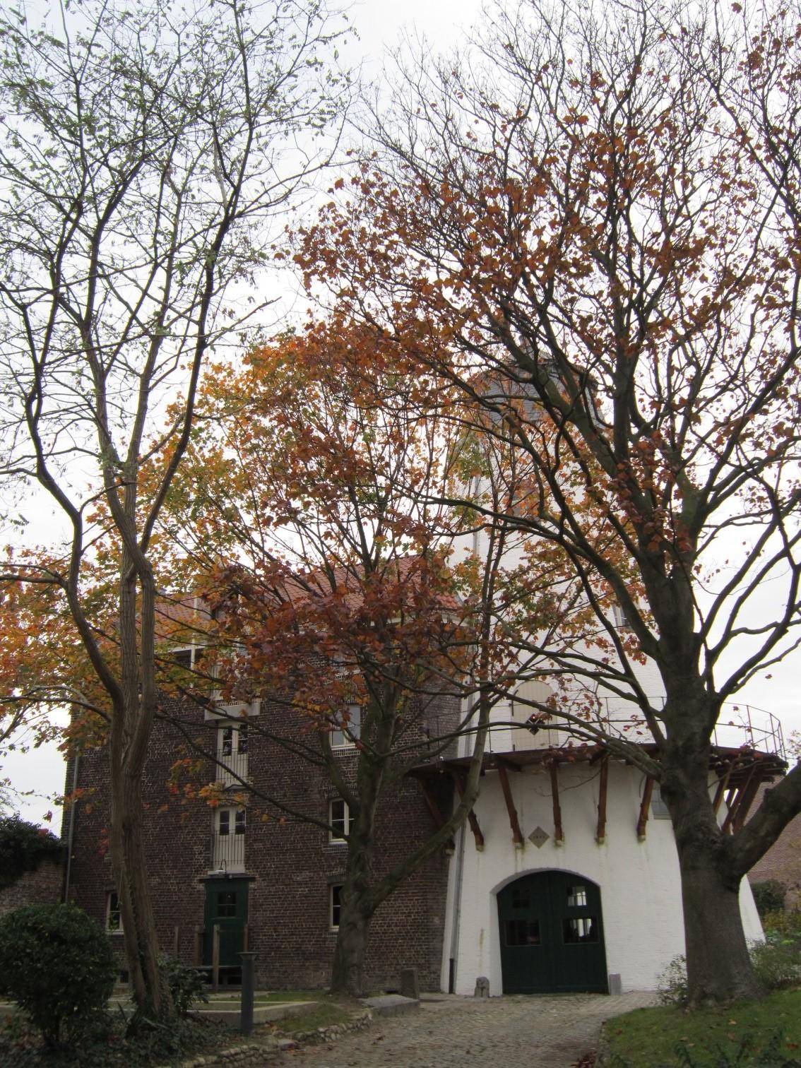 Rue du Tilleul 189, moulin à vent